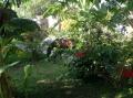 Mit Pferden im Vorgarten.