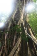 ... archaische Bäume ...